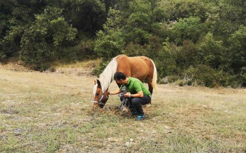 Horse contact
