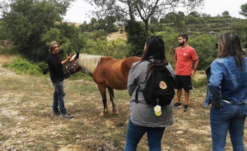 Explaining the horse habits